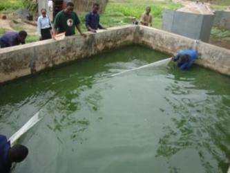 Students Harvesting Catfish Fingerlings In Concrete Tank